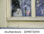 Stock photo cat looking out the window 209872054