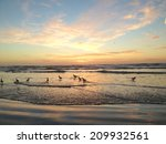 birds in water at sunset | Shutterstock . vector #209932561