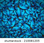 beautiful background with lot... | Shutterstock . vector #210081205