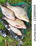 Small photo of Catching fish. The Common Carp (Cyprinus Carpio), Common Bream (Abramis brama), Common Roach (Rutilus rutilus).