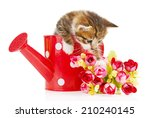 Cute Little Kitten In Watering...