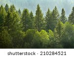 Forrest Of Green Pine Trees On...