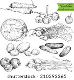 set of ink drawing vegetables ... | Shutterstock .eps vector #210293365