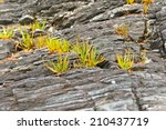grass growing on rocks | Shutterstock . vector #210437719