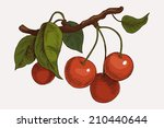 vector hand drawn cherry branch ...
