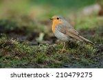 robin | Shutterstock . vector #210479275