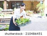 the female clerk in the flower... | Shutterstock . vector #210486451