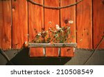 White Daisies In A Brown Pot O...