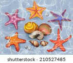 seashells on the bottom of the... | Shutterstock . vector #210527485