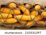 Background Of Corn In Sack...