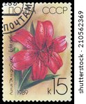 Small photo of USSR - CIRCA 1989: a stamp printed in USSR shows flower lilium Eclat du Sour, circa 1989