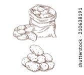 potatoes set | Shutterstock .eps vector #210638191