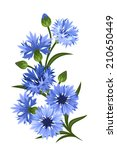 Branch Of Blue Cornflowers....