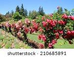 Stock photo blooming garden 210685891