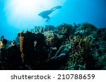 various hard coral reefs in... | Shutterstock . vector #210788659