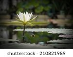 white meditative waterlily in... | Shutterstock . vector #210821989
