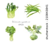 watercolor vegetables vector... | Shutterstock .eps vector #210843841