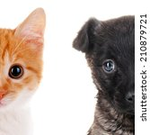 Stock photo cute cat and dog faces isolated on white 210879721