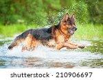 German Shepherd Dog Jumping In...