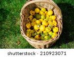 Basket Of Harvest Fruit...