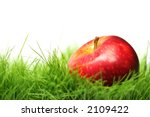 Red Apple In Green Grass With...