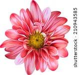 mona lisa flower  red flower ... | Shutterstock .eps vector #210943585