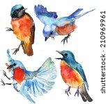 watercolor blue birds on white... | Shutterstock . vector #210969961