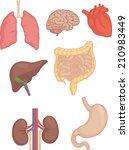 ������, ������: Human Body Parts