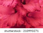 Stock photo close up of flower petals 210993271