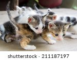 Stock photo the kittens who were played among themselves 211187197