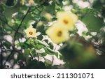 shoe flower or hibiscus or...   Shutterstock . vector #211301071