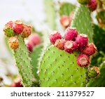 Prickly Pear Cactus Close Up...