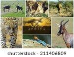 african wild animals safari... | Shutterstock . vector #211406809