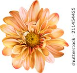 Orange Chrysanthemum Flower ...