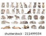 Stock photo collage of cute small grey cats isolated on white 211499554