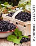 freshly harvested forest... | Shutterstock . vector #211671559