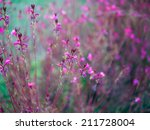 pink flowers abstraction | Shutterstock . vector #211728004