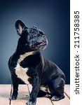 portrait of a dog | Shutterstock . vector #211758385