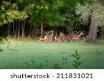 Herd Of Hinds Standing In...