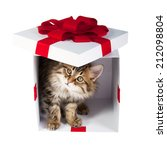 Stock photo small cute kitten inside gift box 212098804