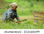 thai farmer working plant rice... | Shutterstock . vector #212160199