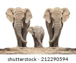 Stock photo african elephant loxodonta africana family on a white background 212290594
