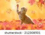Stock photo young cat with blue eyes playing in autumn leaves 212308501