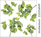 Set Of Vector Coffee Trees In...