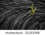 single green fern plant growing ...