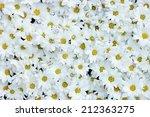 White Daisy Background Texture...