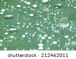 Lotus Leaf With Water Drops...