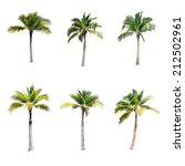 Stock photo coconut trees on white background 212502961