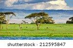 Lake Naivasha In Kenya  Africa