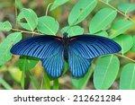 Black Butterfly  Great Mormon ...